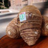 [沼津]豊かなトキを味わう「大中寺いもの収穫体験とお寺でお昼ごはん」